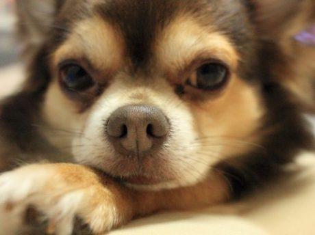 犬のためのリフォーム