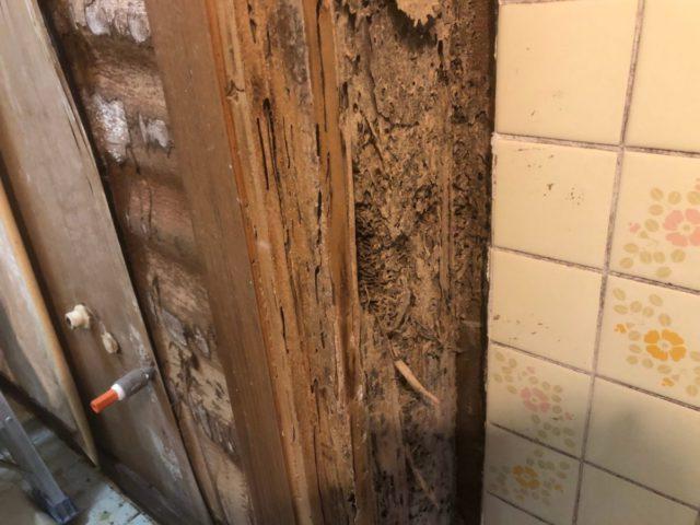 お風呂解体中に発見したシロアリ